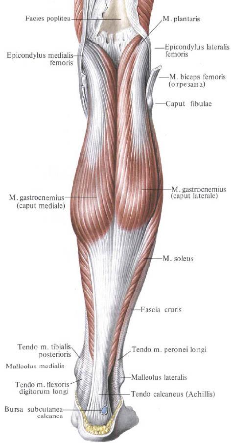 metatarsofalangeális lábujjak kezelése
