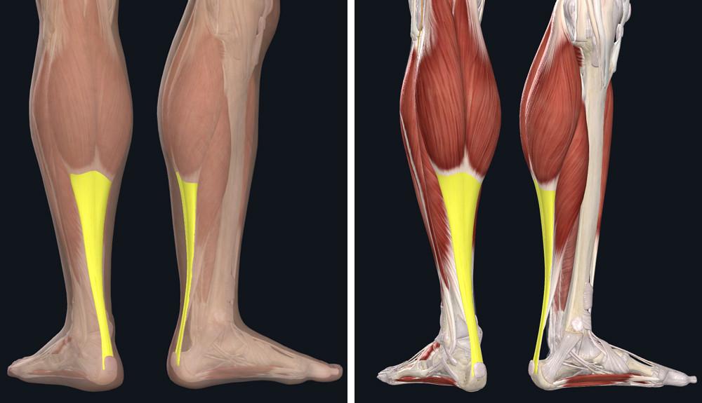fájdalom a lábak ízületeiben hosszú séta után)
