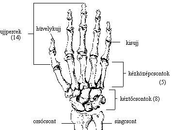 könnyező fájdalom a kéz ízületeiben amikor ízületi fájdalmak tünetei