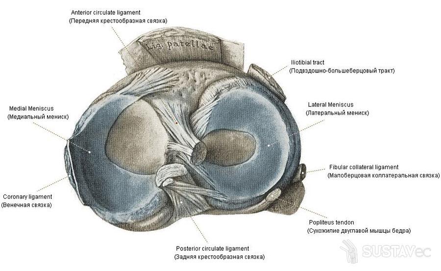 mit kell átlyukasztani a térdízületek artrózisával