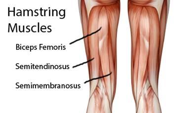 térdízületek és izmok fájdalma milyen gyógyszerek segítik az ízületi fájdalmakat