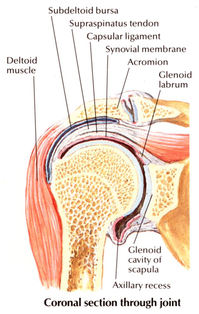 vállizületi gyulladás fájdalom a lábízületben járás közben