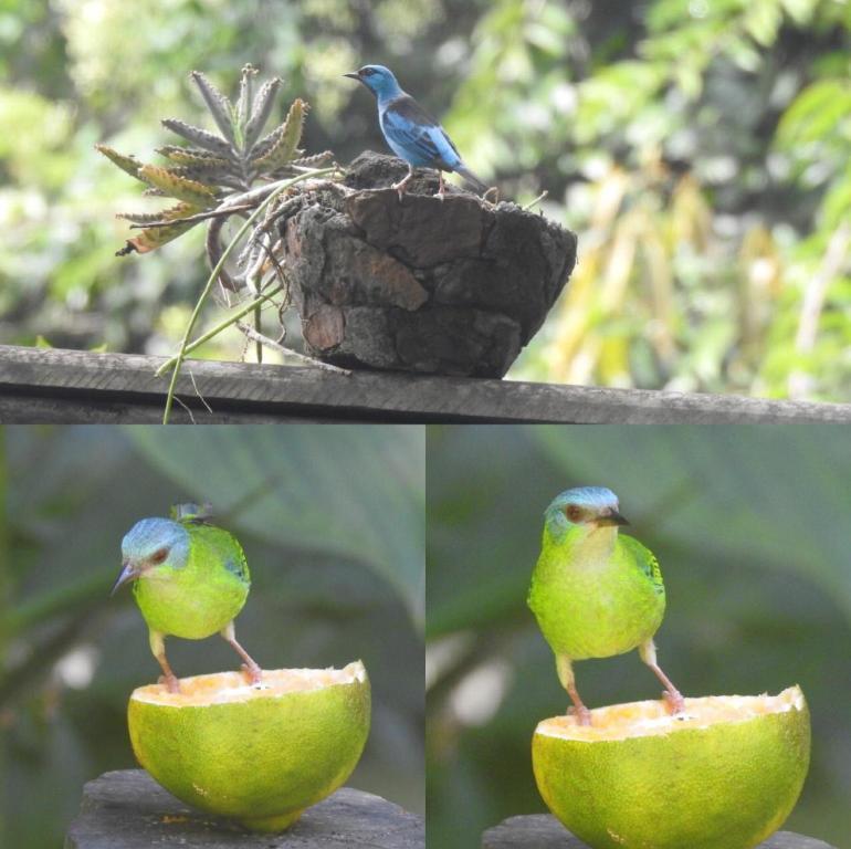 közös kezelés bluebird