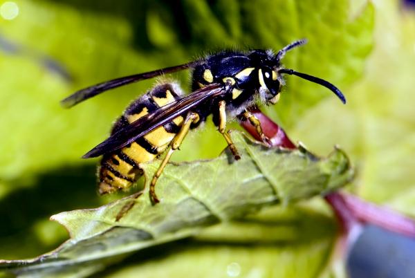 hogyan lehet a vállízületet méhcsípéssel kezelni)