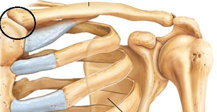 az acromialis ízület az artritisz különbsége a térd artrózisában