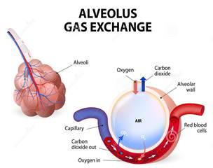 doxiciklin az artrózis kezelésében