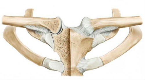 clavicularis arthrosis szegycsontjának kezelése)