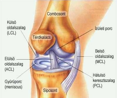 hogyan lehet eltávolítani a fájdalmat a térd artrózisával)