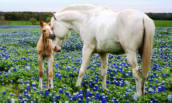 kenőcs ló számára ízületekhez
