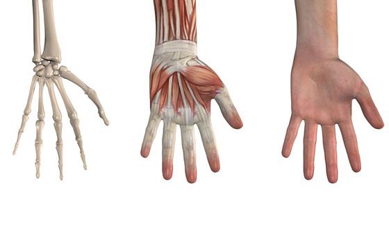 a csuklóízület ii. fokozatú osteoarthritis