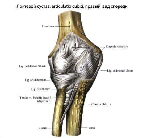 a könyökízületek rheumatoid arthritis tünetei)