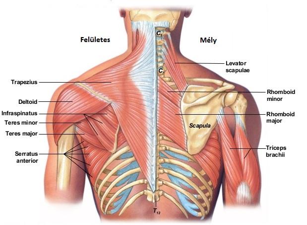 reumatológus ízületi kezelés az artrózis legjobb kezelése