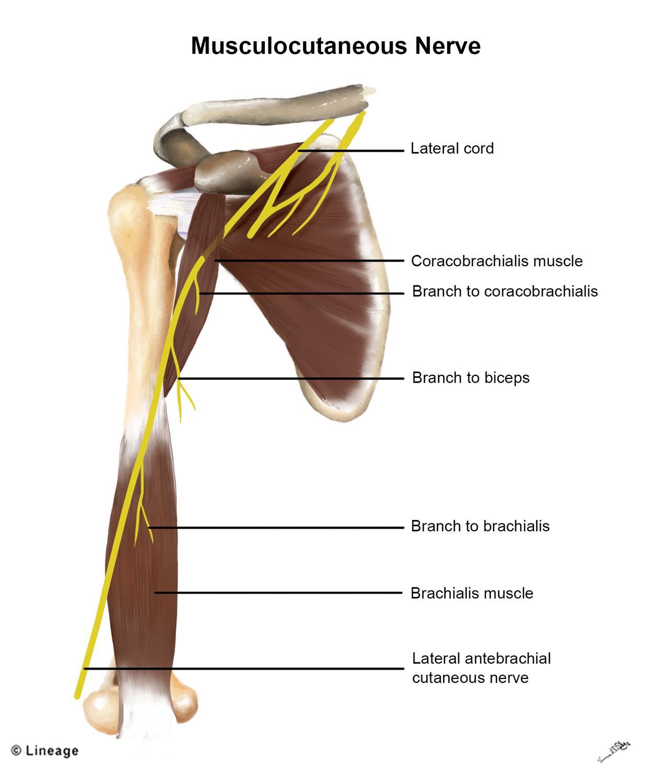 brachialis osteochondrosis kenőcs