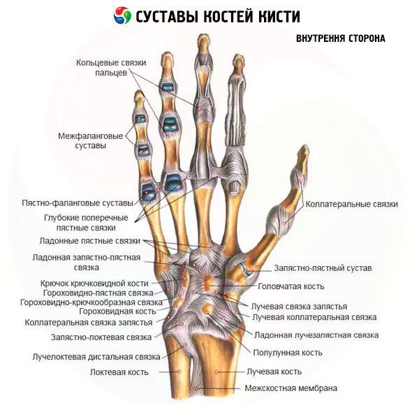 ligamentum testbalzsam az ízületekben)