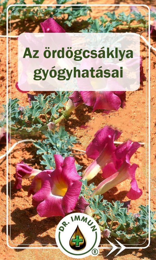 A 10 legjobb illatú növény kertjében