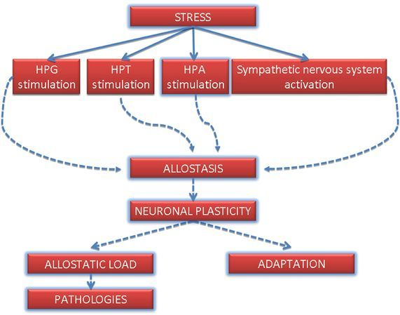 hogyan lehet kezelni az osteoarthritis csontritkulását)